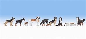 15717 Собаки