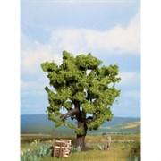 21760 Дуб 15 см деревья