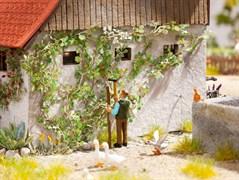 14132 Дикий виноград (12 растений)